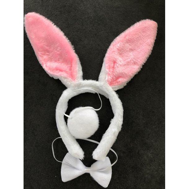 Kaninører på hårbøjle ( hvid butterfly og hvid hale )